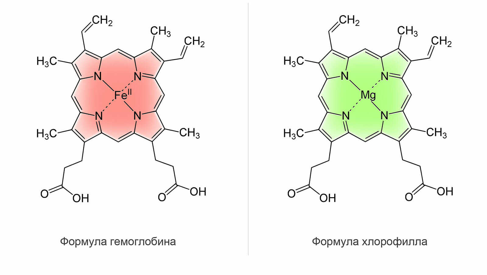 mixed ligands complexes of l amino acid and ascorbic acid Calcium ascorbate vs ascorbic acid if regular ascorbic acid supplements cause you to experience side effects, such as diarrhea, upset stomach or heartburn.