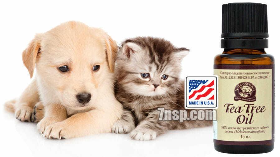 Применение масла чайного дерева как средства от блох и клещей у домашних кошек и собак