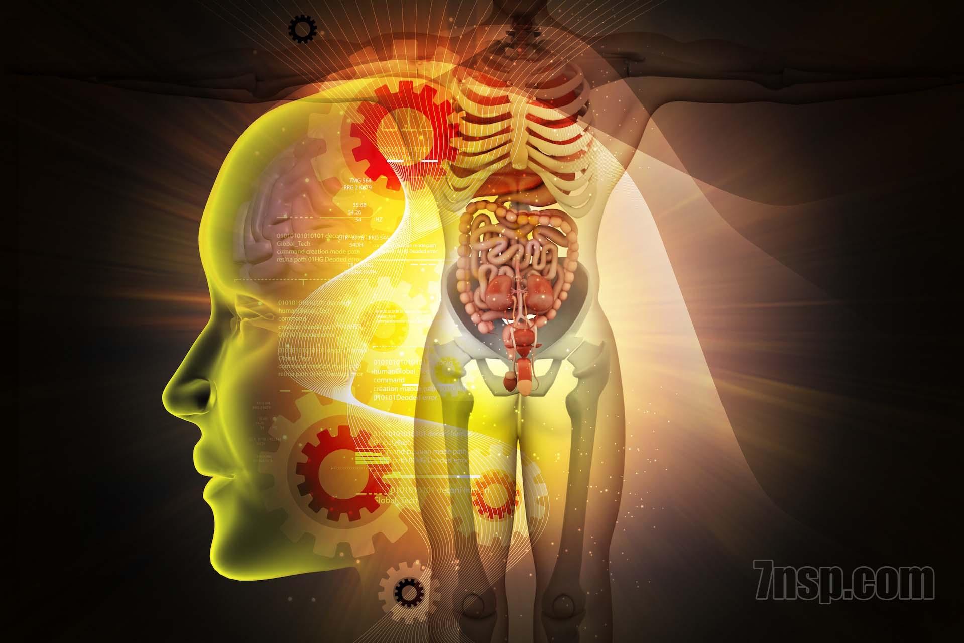 Каталог препаратов, натуральных бад НСП по системам организма человека. Цены на препараты.